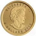 GOLD 1/10 oz GOLD MAPLE LEAF